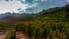 Vendanges du Marcillac (Jeffray12) Tags: valady marcillac aveyron vin wine vendanges vignes vine harvest