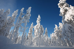 Finland - Lapland - Backyard Levi Panorama Hotel - (shoot it!) Tags: levi lapland finland hotel levipanaramahotel backyard tree trees v boom bomen snow sneeuw mountain skiing skien wintersport winter februari 2018