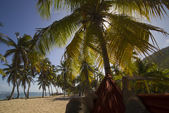 Life is good in Guadeloupe (JR-pharma) Tags: guadeloupe caraïbes frenchwestindies lesserantilles gwada cocotiers westindies west indies cocotier tropiques karukéra karukera tropical french fwi antilles antillas caribbean caraibes 971 canon eos mark 1 mk i classic island île tamron 1735 f284 tamron1735 antillesfrancaises ladesirade désirade desirade ladérisade canon6d canoneos6d rando hiking hike