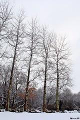Photos Marco BP (21)_GF (marcbihanpoudec) Tags: bretagne neige plabennec plan deau lac banc arbres