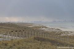 32a (Marjon van der Vegt) Tags: zonzeestrand wolken wind paddenstoel golven koud boomgezichten
