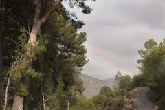 IMG_1166  Path in the mountains No.40 (jaro-es) Tags: canon españa spanien spain spanelsko nature natura natur naturewatcher naturemaster naturesfinest weg path camino wald forest