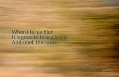 Daily Haiku: Blur - 066/365 (James Milstid) Tags: dailyhaiku haiku haiga poetry jemhaiku blur icm