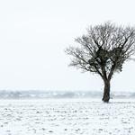 Winter Scenes thumbnail