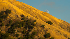 Moon Rising, Big Sur, California (Nepo Goldman-Piculell) Tags: moon bigsur california evening scenic hill