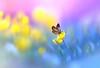 Beauty of Butterfly (Chiradeep.) Tags: butterfly macro bokeh photoart photopaint photopainting photoshop nature flower