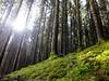 Es grünt so grün das Moos :-) (Antje_Neufing) Tags: moos wald schillingen hochwald baum natur licht wanderweg sonne gegenlicht germany deutschland
