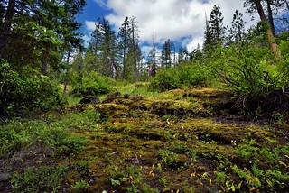 A Hillside View Leading up to Blue Skies and Clouds Above (North Cascade National Park)