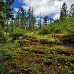 A Hillside View Leading up to Blue Skies and Clouds Above (North Cascade National Park) thumbnail