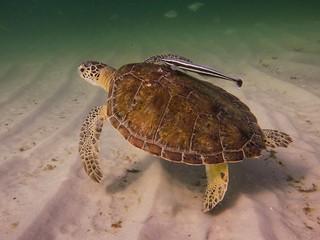 Get Off My Back at Navarre Beach Marine Sanctuary