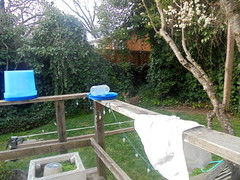 DSC02009 (classroomcamera) Tags: home house backyard yard garden yards backyards gardens green blue stuff deck decks forest forests wood woods wooden towel towels bucket buckets deer tree trees animal animals branch branches plant plants bush bushes