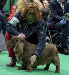GAZ_1329 (garethdelhoy) Tags: dog sussex spaniel crufts 2018 kennel club