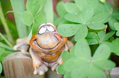 Where´s my princess? (inma F) Tags: macromondays frog cuento verde rana trebol princesa macro green fairytale fairy onceuponatime