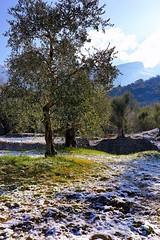 Il fascino del disgelo... (giobertaskin) Tags: disgelo neve ulivi lago lagodigarda fascino cielo nube canon