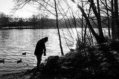 Maybe I can find spring (gambajo) Tags: brühl lake pond water nature landscape winter people man street streetphotography blackandwhite blackwhite black white trees birds ducks outdoors 1year1town1lens x100s fujix100s fujifilmx100s old