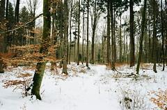 (Kathleen Vtr) Tags: woods snow countryside switzerland home landscape 35mm film explore grain kodakgold canonae1 photography outdoor winter hike