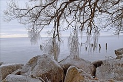 Mother Natures Decorations (Sue90ca Let The Holidays Begin :)) Tags: canon 6d erieau ice lakeerie