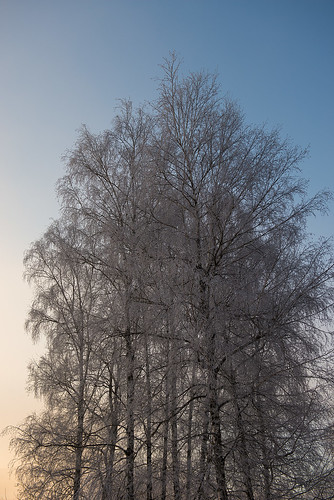winter tree ©  Andrey