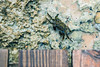 my new friend (Eric Vidal Photographie) Tags: shore sand crab holliday sea sony sonya7 sonya7r