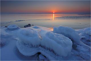 Scallops on Ice