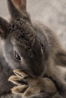 Cuteness Overload III: Rabbit Foot