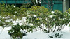 Winter Storm Skylar (kuntheaprum) Tags: winterstorm skylar blizzard 15footersnow nikon d5300 tamron samyang f14