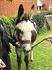 Donkey at Church today for Palm Sunday!