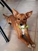 Chiquita (jagar41_ Juan Antonio) Tags: perros perro mascotas mascota