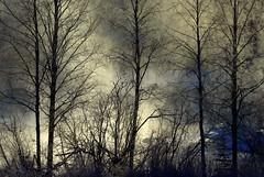 The frosty and misty morning (irio.jyske) Tags: landscapepic lanscape landscapes landscapephotograph landscape landscapephotographer landscapephotos lakescape naturepic naturescape naturephotograph naturepictures naturephoto naturephotographer naturephotos nature naturepics trees birches river creek frog misty frosty freezen frozen sunny sunrise cold snow winter water morning nice beauty