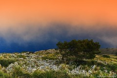 Never let yourself break (Yarin Asanth) Tags: daytrip mallorca balearicislands ocean sea mist fog storm trees hills mountains hiking island yarinasanthphotography gerdkozikfotografie