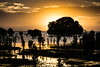Road Trippin (sgiles46) Tags: southaustralia dawn ptclinton ptclintonconservationpark conservationpark seascape landscapehunter landscape silhouette nationalparkssa mangrove gulfstvincent golden sagreat yorkpeninsula