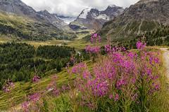Contrasti (cesco.pb) Tags: valviola valtellina lombardia lombardy italia italy alps alpi canon canoneos60d tamronsp1750mmf28xrdiiivcld montagna mountains