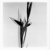 iris with shadow (bamboolizer) Tags: hasselblad503cw carlzeiss120mmf4makrocf film rolleirpx400 bw blackandwhite 120 rollfilm flower analog monochrome ilfordrcpaper darkroom darkroomprinting enlarger stilllife 銀鹽 寫真 黑白 multipleexposure 多重曝光 花 植物 iris