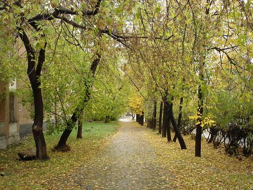 Осень 2006 ©  ayampolsky
