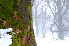 Black and white and colour: Fairliehope wood, above Carlops, Scottish Borders (Richard Xe) Tags: carlops scottishborders trees winter green lichen