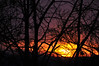 7:34 am (jeangrgoire_marin) Tags: sunrise winter sun aube matin hiver weather silhouettes trees arbres branches orange purple violet