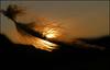 Sunset silhouette (McRusty) Tags: buzzard feather silhouette orange sky setting sun wild natural dell estate stratherrick highland scotland outdoor