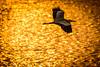 夕映えーEvening glow (kurumaebi) Tags: yamaguchi 秋穂 nikon d750 nature 自然 landscape 海 sea 夕焼け dusk 鳥 birds アオサギ helon