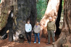'Just spent a week with the best friends a person could hope for. (rootcrop54) Tags: henrycowellredwoods santacruz trip vacation present elaine david sally 2018 oldgrowth redwoods redwood trees grove