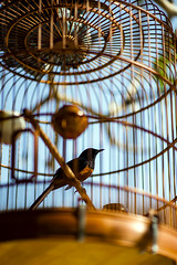 If you love someone .. set them free ! (trungtruc1602) Tags: bird cage freedom