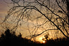 Morning Sky And Trees. (dccradio) Tags: lumberton nc northcarolina robesoncounty sunrise risingsun saturday saturdaymorning morning goodmorning nature natural outdoors outside tree trees sky clouds morninglight nikon d40 dslr branches sticks treebranch treebranches treelimbs