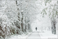 winter (heavenuphere) Tags: netherlands nederland europe zuidholland southholland albrandswaard poortugaal landscape nature winter december walk freezing cold snow snowing trees path one person silhouette 24105mm