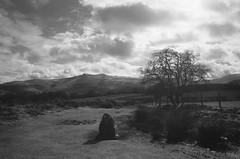 Mynydd Illtud stone and Penyfan (Christopher M Hight) Tags: olympusom1 ilford fp4 135 standing stones breconbeacons