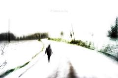 Our Darkness (Fabrice Le Coq) Tags: vert blanc bleu neige pelouse piéton arbre ciel flou paysage route froid photo photoart
