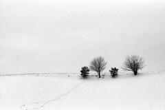 The white - Bergonzano  (Reggio Emilia) - February 2018 (cava961) Tags: snow analogue analogico monochrome monocromo bianconero bw