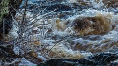 Istapp vid Mörrumsån (tonyguest) Tags: istapp icicles mörrumsån mörrum blekinge sverige karlshamn sweden river vattenflöde tonyguest stockholm water winter 16x9 istappar