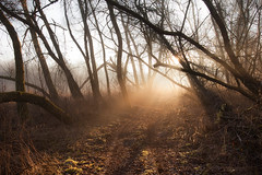 Towards the light (xkolba) Tags: misty morning tree trees forest warmlight sunlight fog path sunrise outdoor landscape podlasie canoneos5dmkii