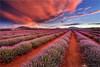 Land of Sunset Dreams (Darkelf Photography) Tags: bridestowe lavender estate farm nabowla tasmania rural australia outback nature sunset evening dusk clouds soil travel landscape summer flora canon nisi 1635mm 5div maciek gornisiewicz darkelf photography 2018 landofsunsetdreams