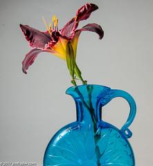 Blue Vase (Jim Frazier) Tags: 2017 elgin closeup details edgewater flash flowers home house illinois jimfraziercom july kane leaf leaves macro plants sb600 sb800 strobe studio study vase q3 blue f10 fastpictures