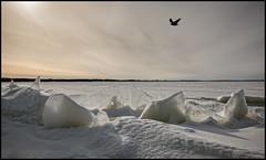 Ice Raven (Jonas Thomén) Tags: ice flakes sea raven snow winter clouds backlight horizon is flak hav korp snö vinter moln motljus horisont